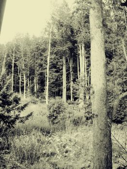 Forest Silence by Edeleth