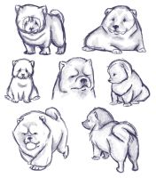 Chow Chow Puppies by laurenkrieger