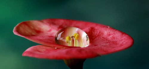 Dew on Center Flower by ardefa