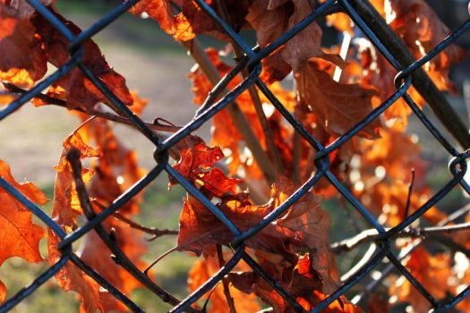 through the fence II by filthyhandss