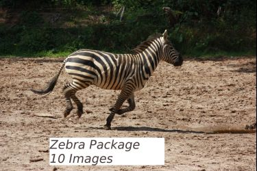 Zebra Package by bookscorpion