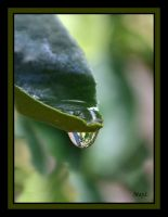 Leafy Lake's Droplet by MayEbony