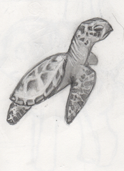 Cute turtle by stormmina