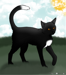 Ravenpaw by Harryn53012
