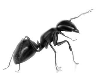 Ant study by ArchsiderPro