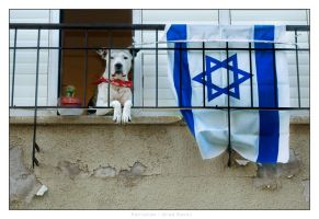Patriotism by gilad