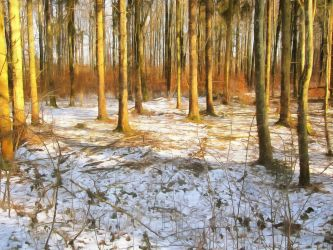 Winter Forest by oldhippieart