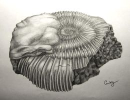 Ammonite by kiwikruemel
