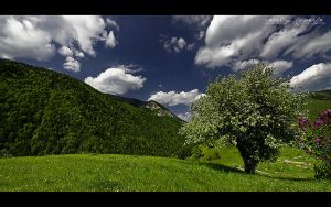 Perfect Day - Panorama by vxside
