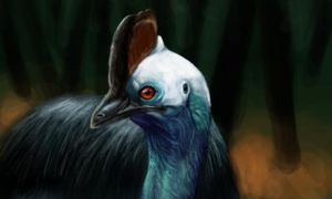Cassowary by Quadrupedal