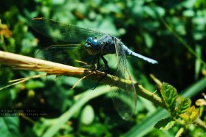 Dragonfly shot 2 by xTernal7