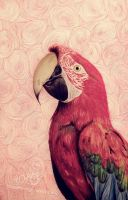 Parrot by sue1993