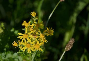 DogWalking - Yellow flowers 1 by chalkwebdesign