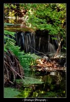Stanley Park 3 by pendragon93