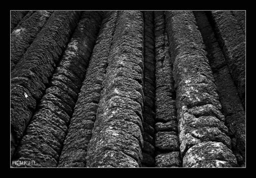 Organ Pipes by fraughtuk