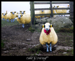 Mareep, the Sheep by NiaWolf