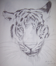 White Tiger Sketch by PersonalAgain