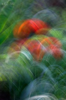 Floral Abstract nr.1 by RaL-2010