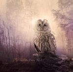 The Owl Tales by Aeternum-designs