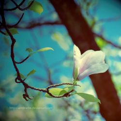 Magnolia by Ant0nette