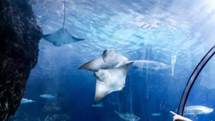 Stingrays at the Denver Aquarium by freyaka