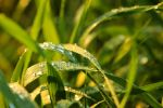 Drops on grass by LoveForDetails