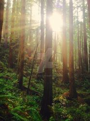 Redwood Forest by Slick-Vic