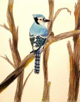 Pastel Bluejay by seraphinwings