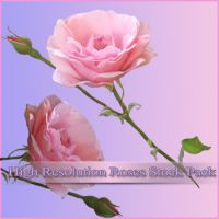 High Resolution PNG Rose Stock by MonochromaticART