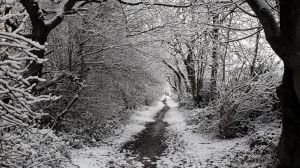 Winter pathway by scotto