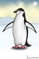 Chinstrap Penguin by Louisetheanimator