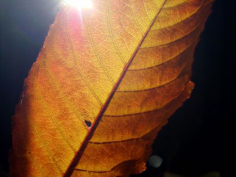 Play With Leaf And Light I by SavageCharms