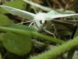 White Moth by ariastrife