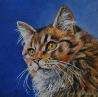 Mr. Sebastion - PAINTING by AstridBruning