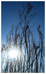 branches and sun by kayne