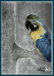 'parrot'-semi color drawing by sagarlike