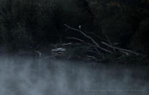Grey Heron and Deadwood by wiebkerost