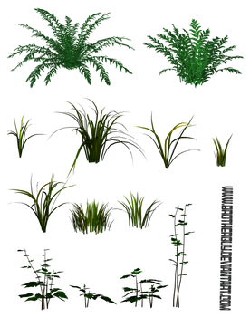 Some PNG Plants2 by brotherguy by BrotherGuy