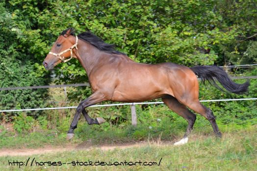 Justification - Stock 13 by Horses--Stock