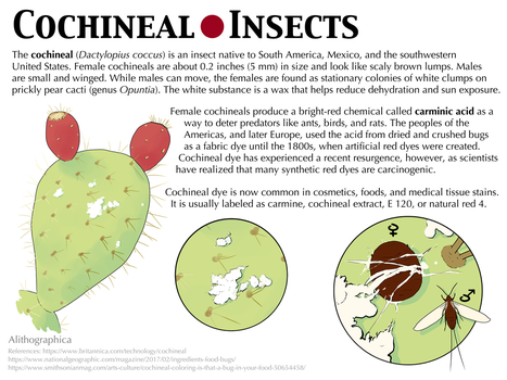 Science Fact Friday: Cochineal Insects by Alithographica