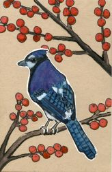 Blue Jay and Red Berries by Jlombardi