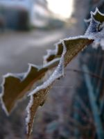 Frosty Leaves 1 by Dwynariel