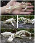Mole Skeleton Complete by Jewel-Wing