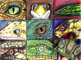 Field Work 2017 - Reptile Trading Cards by TheLastHetaira