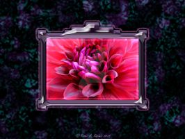 Dahlia, Framed  by peterkopher