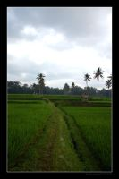 Rice Fields by Keith-Killer