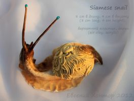 Siamese snail - for sale by hontor