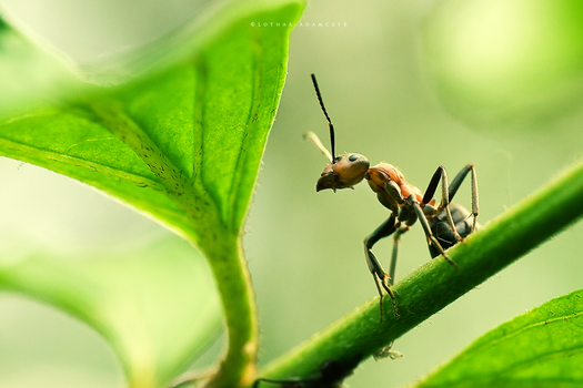 Ant World by DREAMCA7CHER