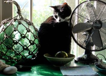 Still Life with Cat by commandax
