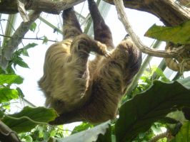 Sloth scratching by thepapercraftcouple